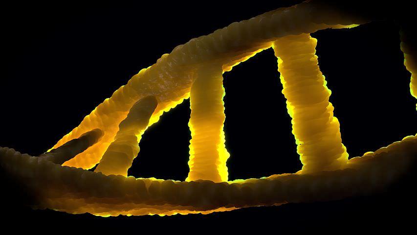 Genetics-DNA